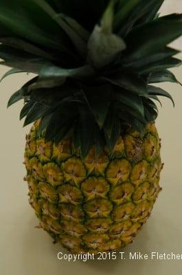 Fresh pineapple for the Pina Colada Cake