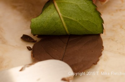Pulling the leaf off chocolate leaf for Buch de Noel