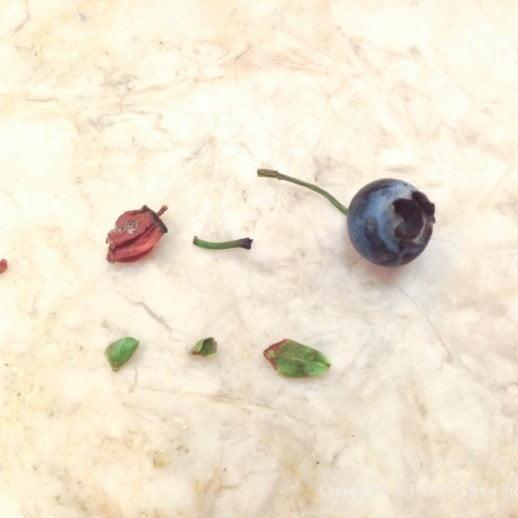 steams-leaves-from-blueberries--for-lemon-blueberry-cake.jpeg